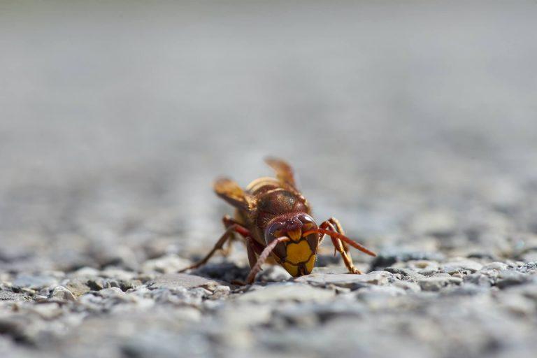 Control de plagas de insectos ¿Qué es más efectivo?